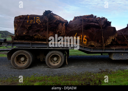 Old Kauri tree trunks on log truck in Northland New Zealand. - Stock Photo