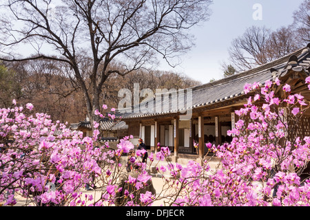 Spring flowers in Changdeokgung Roayl Palace, Seoul, Korea - Stock Photo