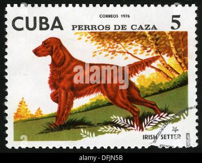 Cuba ,1976,post mark, stamp,dogs, fauna, irish setter - Stock Photo