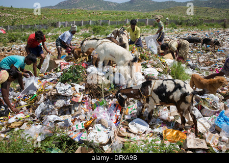 Poor Indian women, men, children, goats and dogs picking through a rubbish tip. Andhra Pradesh, India - Stock Photo