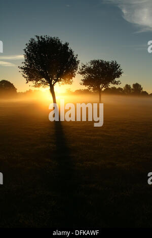 Peterborough, Cambridgeshire, UK. 6th October 2013.  Early morning mist at Nene Park behind these trees just after - Stock Photo