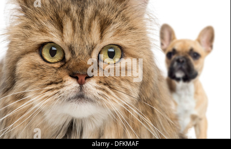 Close-up of a cat and dog hiding behind against white background - Stock Photo