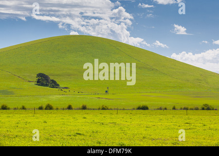A hill near Creswick shines on a spring day near Creswick in the Victorian goldfields, Australia - Stock Photo