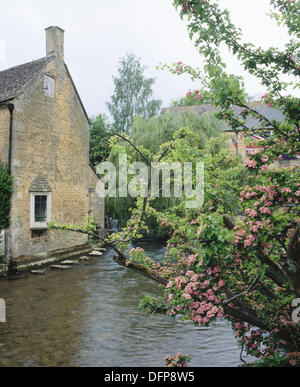 Old mill and Hawthorn tree along River Windrush, the Cotswolds. Bourton-on-the-Water. Gloucestershire, England, - Stock Photo