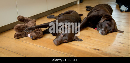 Fashion designer Andrew Fionda at his Sussex home 2013. Hi dogs snooze on the kitchen floor. - Stock Photo