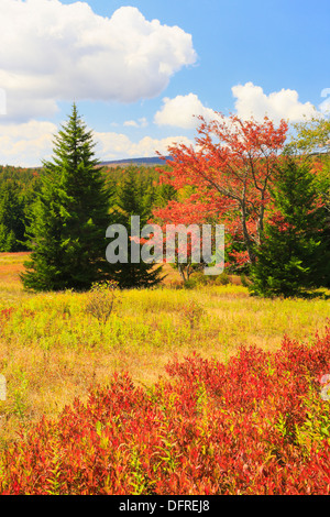 Blackbird Knob, Blackbird Trail, Dolly Sods Wilderness, Hopeville, West Virginia, USA - Stock Photo
