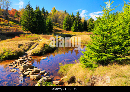 Left Fork Red Creek, Blackbird Trail, Dolly Sods Wilderness, Hopeville, West Virginia, USA - Stock Photo