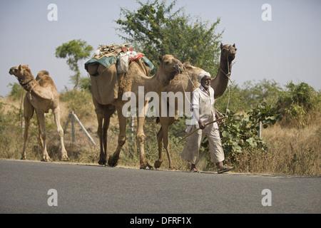 Camel convoy walking on road, New Burhanpur, Madhya Pradesh, India - Stock Photo