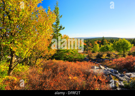 Blackbird Trail, Dolly Sods Wilderness, Hopeville, West Virginia, USA - Stock Photo