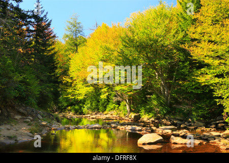 Red Creek Crossing, Blackbird Trail, Dolly Sods Wilderness, Hopeville, West Virginia, USA - Stock Photo
