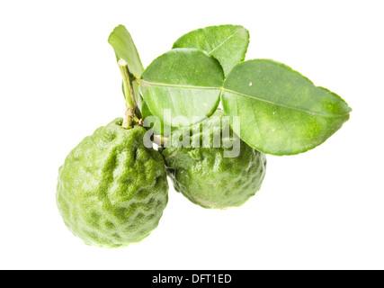 Kaffir Lime or Bergamot fruit isolated on white background - Stock Photo