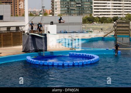 mix acrobatics with the dolphin performance. exhibition at the Dolphinarium where acrobats mix risky acrobatics - Stock Photo