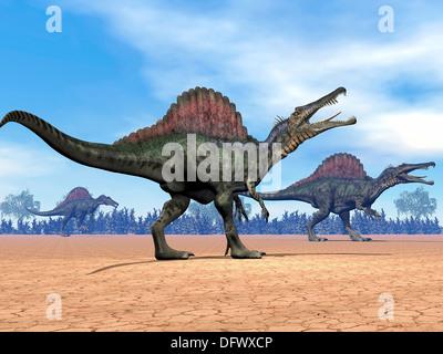 Three Spinosaurus dinosaurs walking in the desert. - Stock Photo