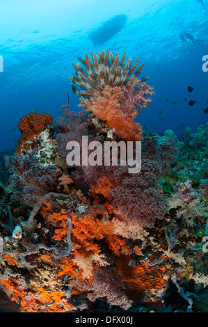 Colorful crinoids and soft corals adorn a reef in Raja Ampat, West Papua, Indonesia. - Stock Photo