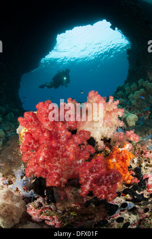 A diver approaches soft corals (Dendronepthya sp.) through Boo Windows, Southern Raja Ampat, West Papua, Indonesia. - Stock Photo