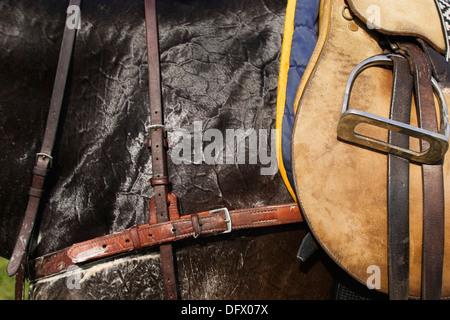 Saddle on Horse, Close-Up - Stock Photo