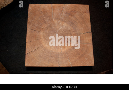 Section of oak beam showing annual rings against  UK - Stock Photo