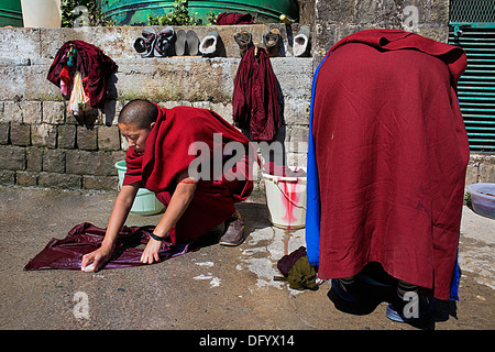nuns washing clothes, in Geden Choeling Nunnery, McLeod Ganj, Dharamsala, Himachal Pradesh state, India, Asia - Stock Photo