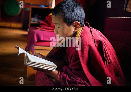Puja,young monk praying, in Dip Tse Chok Ling Monastery.McLeod Ganj, Dharamsala, Himachal Pradesh state, India, - Stock Photo