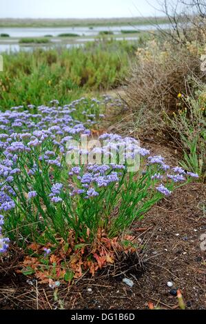 Flowers Of The Sands Limonium Sp Odiel Marshes Natural Place Huelva