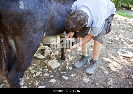 Man cleaning the hooves of a donkey - Stock Photo