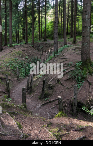 First World War One London communication trench / tranchée de Londres in forest, Douaumont, Lorraine, Battle of - Stock Photo