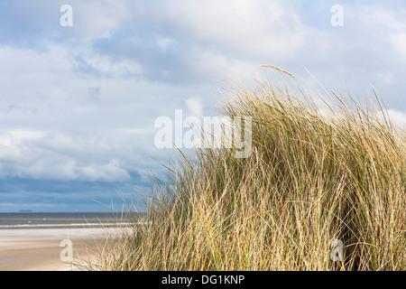 Marram grass on the east frisian island of Spiekeroog, Lower Saxony, Germany, Europe - Stock Photo