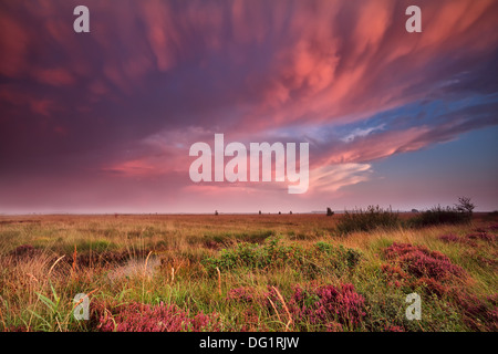 mammut clouds over swamp during dramatic sunset, Fochteloerveen, Netherlands - Stock Photo