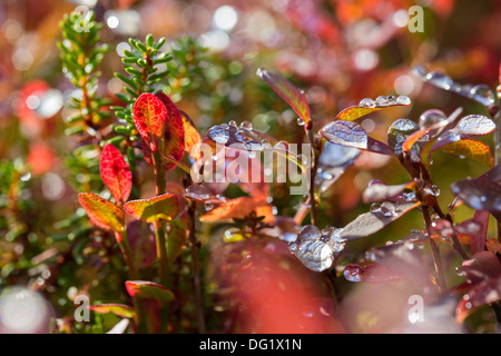 Zoomed plant leaves after rain at sunny weather - Stock Photo