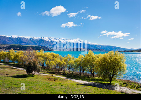 New Zealand, South Island. Trees in Spring leaf at Lake Dunstan, seen from the fruit growing town of Cromwell - Stock Photo