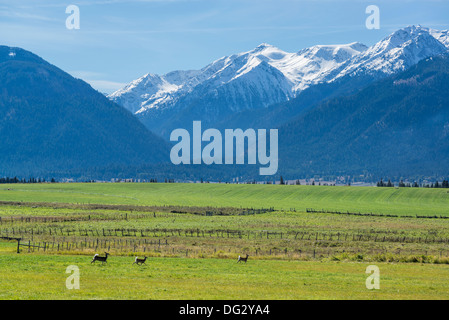 Deer running through Oregon's Wallowa Valley. The Wallowa Mountains are in the background. - Stock Photo
