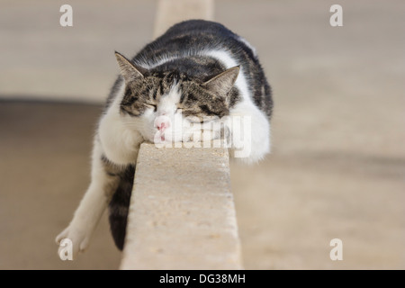 Cat sleeping on a wall - Stock Photo