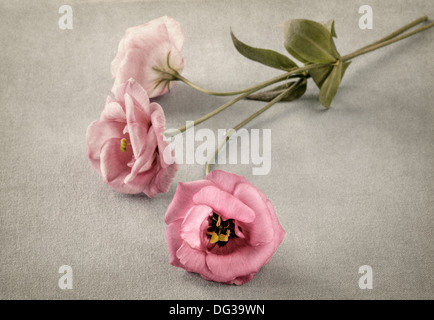 Three pink flowers with texture overlay - Stock Photo