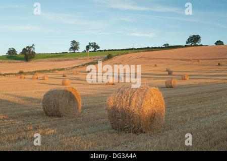 Hay bales in rolling countryside in Upper Tysoe, Warwickshire, England, UK - Stock Photo
