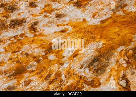 Colorful bacteria mat surrounding Grand Prismatic Spring, Midway Geyser Basin, Yellowstone National Park, Wyoming