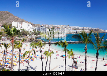 Palm trees at the beach, Arguineguin, Anfi del Mar, Playa de la Verga, Gran Canaria, Canary Islands, Spain, Atlantic, - Stock Photo