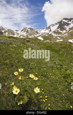 View of Pennine Alps (aka Valais Alps) from Great St Bernard Pass, Col du Grand-Saint-Bernard, Colle del Gran San - Stock Photo
