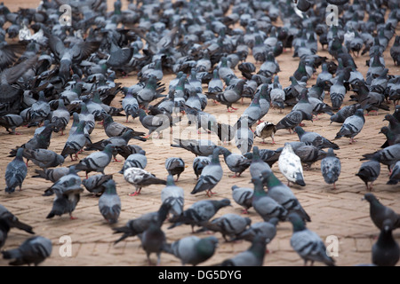 A group of pigeons at the Boudhanath Stupa, one of the main landmark in Kathmandu, Nepal. - Stock Photo