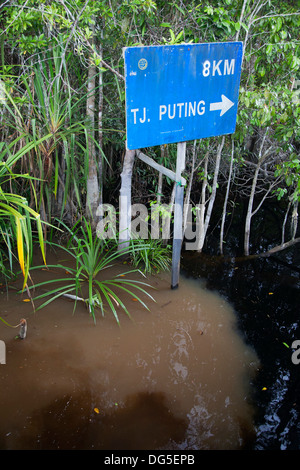 Natural clean black water of the Sekonyer Kanan tributary flowing into muddy water of the main Sekonyer River polluted - Stock Photo