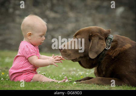 Baby with brown chocolate Labrador dog - Stock Photo