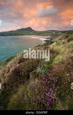 Whitesands Bay near St.Davids in Pembrokeshire on a wet and windy autumnal afternoon, heather in full bloom along - Stock Photo