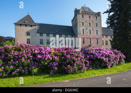 Common / pontic rhododendron (Rhododendron ponticum) flowering in garden of Male Castle, Sint-Kruis near Bruges, - Stock Photo