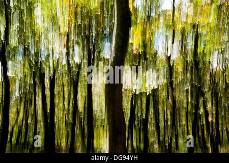 Tree Blur on Mountain-to-Sea Trail, Craggy Gardens - near Asheville, North Carolina, USA - Stock Photo