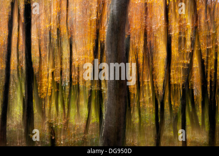 Autumn Tree Blur on Mountain-to-Sea Trail, Craggy Gardens - near Asheville, North Carolina, USA - Stock Photo