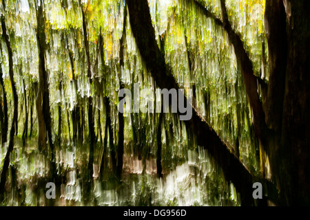 Tree Blur on Mountain-to-Sea Trail, Craggy Gardens - near Asheville, North Carolina, USA - Stock Photo