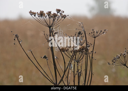 Autumn Morning Dew and Cobwebs - Stock Photo
