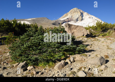 alpine meadow, east face of Mount Hood volcanoe, Cooper Spur Trail, Cascade Range, Oregon, USA - Stock Photo