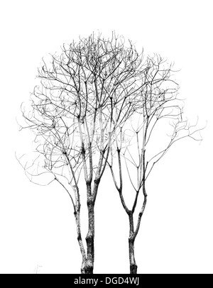 The dead tree isolated on white background - Stock Photo