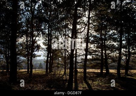 Sunlight through trees on Folly Hill, Faringdon on a winter's morning - Stock Photo