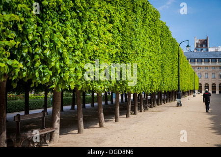 Line of trees in the garden of Palais Royal, Paris France - Stock Photo